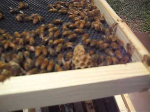 Beekeeping: Yikes! What Is This?