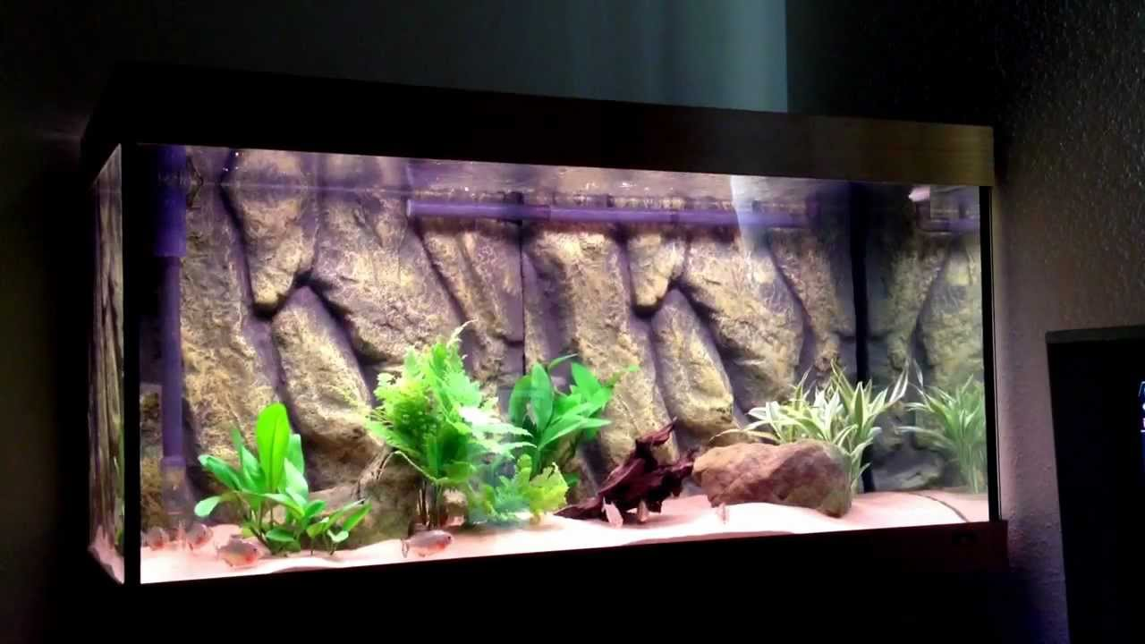 basic guide to keeping Red Bellied Piranha Pt. 1 (tank se - YouTube