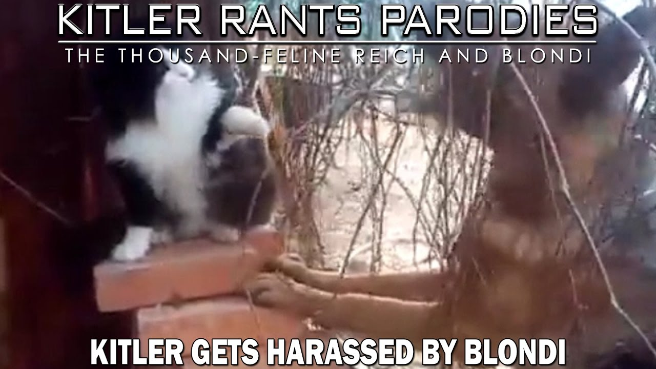 Kitler gets harassed by Blondi
