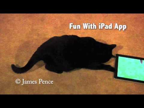 "My Polydactyl Cat Having Fun Playing With iPad App ""Fun And Games For Cats."""