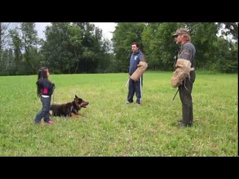 Les plus gros chiens au monde | FunnyDog.TV