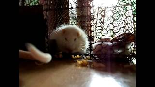 Our New Family Members | Cute Mouse Video | Cute Mouse moments |  My pet
