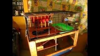 Домик для морских свинок.(, 2013-02-05T17:47:35.000Z)