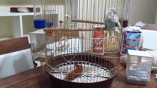 Muhabbet Kuşu Kafesinde Neler Bulunması Gerekir.
