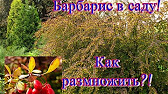 Пчеловодство. Бондаренко Павел-Человек Лаванда - YouTube