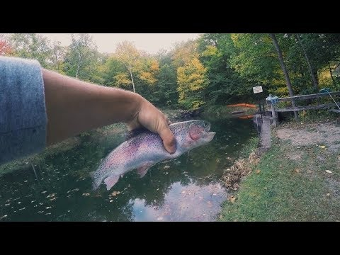 CRAZY Trout Fishing In Massachusetts!