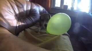 Video Charlotte and balloon. download MP3, 3GP, MP4, WEBM, AVI, FLV Agustus 2018