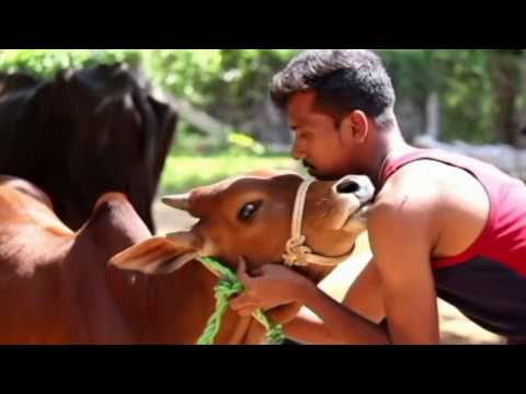 kombu vacha singamada - JALLIKATTU (idhu oru adayalam) -video | G V Prakash kumar,...