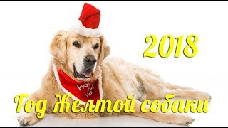 видео Как встречать Новый год Собаки 2018