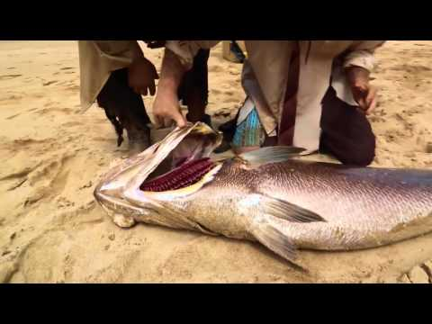 Дзідзьо,Лесик і Юлік зловили португальську рибу