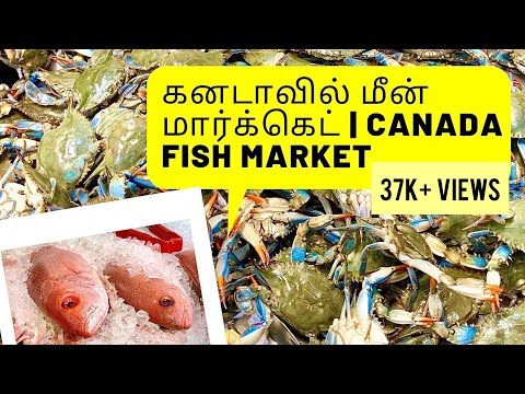 Fish Market In Canada |கனடாவில் மீன் மார்க்கெட்|Canada Tamil Vlog|Seafood & Grocery Haul W/Prices
