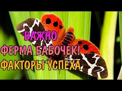 ФЕРМА БАБОЧЕК. ФАКТОР УСПЕХА