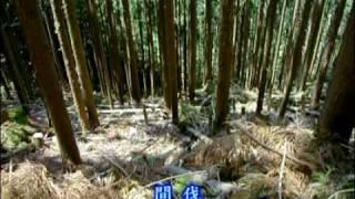 日本最古の人工林・歴史の証人【かわかみ村・下多古村有林】第2回