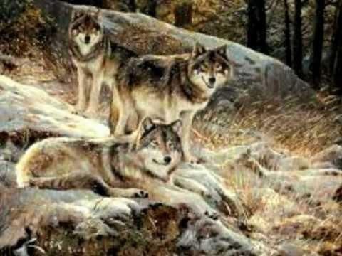 Los Lobos del Norte ''La Cobija''