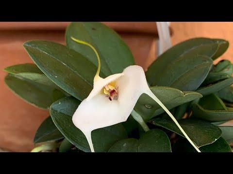 Обзор цветов на ноябрь. Конец осени. Коллекция орхидей. Орхидеи в интерьере.