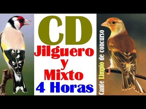 Descargar CD Jilguero y Mixto 4 Horas para educar a cante Limpio de Concurso
