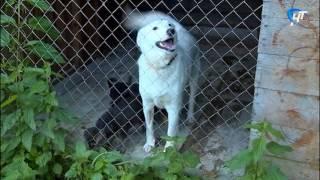 В Великом Новгороде приостановлен отлов бродячих собак