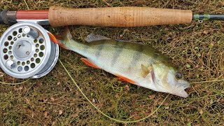 Fly fishing for redfin
