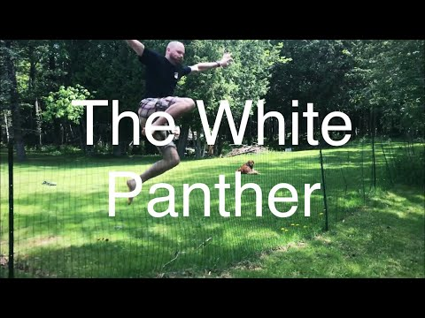 The White Panther!
