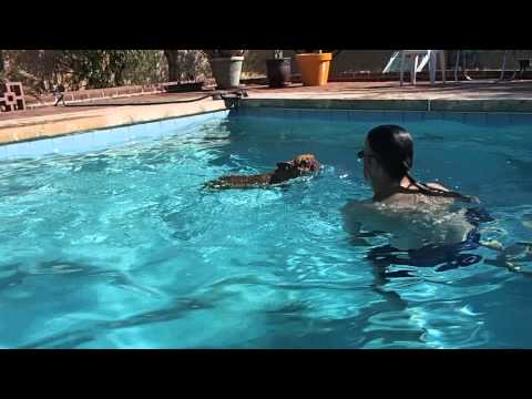 French Bulldog LOVES the swimming pool