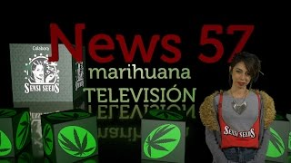 CANNABIS EN EL CONGRESO en NEWS 57