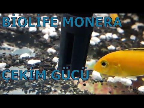BİOLİFE MONERA ÇEKİM GÜCÜ, Akvaryum Balıkları