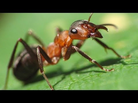 Вредные и полезные насекомые Час у дачи 19042014 GuberniaTV