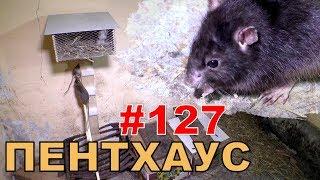 """#127. Реалити Шоу """"ALCARATZ"""". ДОМ 2 - Крысы. Пентхаус"""