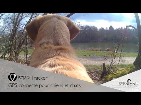 Collier connecté GPS de chez Eyenimal / Numaxes, IOPP Tracker.