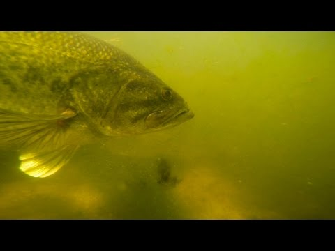 INSANE Underwater Bass Fishing Footage!!