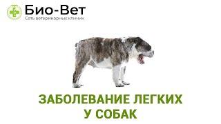 Как И Чем Обрабатывать Рану Собаке И Кошке & Обработка Раны Собаке И Кошке. Ветклиника Био-Вет