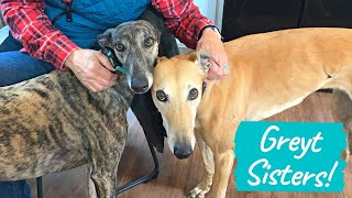 Why 2 Greyhounds are Better than 1