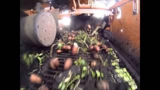 Уборка картофелеуборочным комбайном КПК-2-01(Уборка картофелеуборочным комбайном КПК-2-01, в трудных условиях(глинистая и сырая почва, много травы). http://kart..., 2014-10-13T11:36:23.000Z)