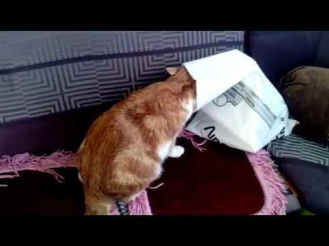 Вопрос: Как отучить кошку лизать пакеты?
