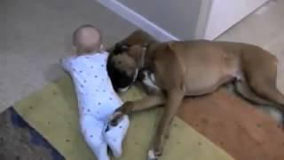 un cane sta giocando con un bambino