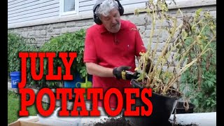POTATO HARVEST IN JULY: Learn how to start early potatoes in 7 gallon buckets.