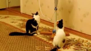 Лето,Кошки, вентилятор, ленточки)))