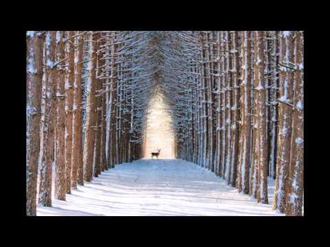 The Most Beautiful Forest in The World