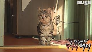 버려진 고양이를 데려왔는데 한 녀석만 공격!