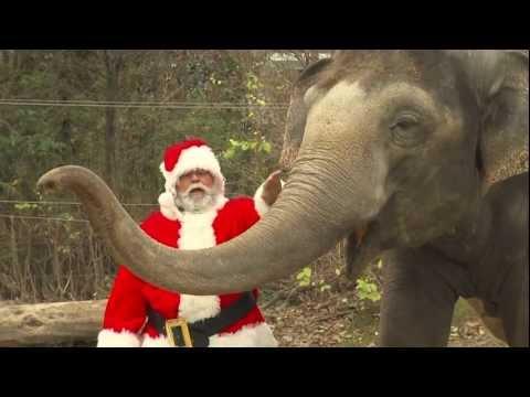 Santa Gives Animals Gifts - Cincinnati Zoo