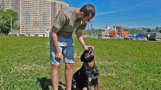 Как дать таблетки собаке крупной породы
