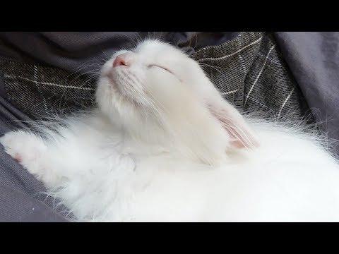 마음까지 정돈되는 고양이 에스테틱 Cat ASMR [크림에스테틱]