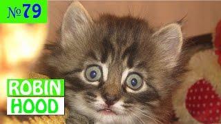 ПРИКОЛЫ 2017 с животными. Смешные Коты, Собаки, Попугаи // Funny Dogs Cats Compilation. Апрель №79