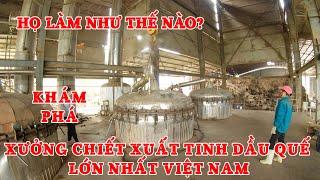HỌ LÀM NHƯ THẾ NÀO - Xưởng Chiết Xuất Tinh Dầu Quế Lớn Nhất VIỆT NAM - VIETNAM CINNAMON OIL