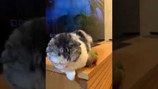 Parrot Annoys Resting Cat || ViralHog