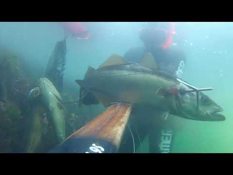 October 2020 - Spearfishing In Norway - Podvodni Ribolov - Lidija Vukić