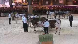 Concours race Normande (1/3)