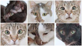 Nyankurutv Vol.7  にゃんくるtv Vol.7 【かわいい猫カフェ/保護猫】【cute Cat Cafe】