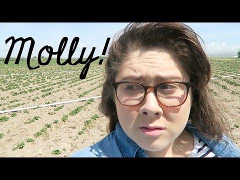 Molly Runs Away