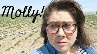 Molly Runs Away thumbnail